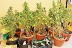 """""""Coltiva marijuana in casa e poi la incendia"""""""