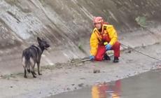 Cane in difficoltà salvato dai nostri eroi