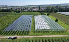 """Arriva il primo impianto """"agrivoltaico"""" in Italia"""