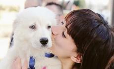 Animali difesa contro la sindrome da lockdown: ed è boom di toelettatori