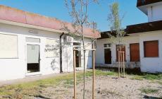 Piantati cinque nuovi alberi all'asilo nido