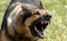 Insegnante col cagnolino assalita da un Pastore tedesco
