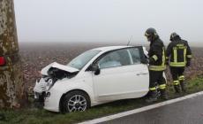 Omicidio stradale, legge polesana<br/>Diego Crivellari può cantare vittoria