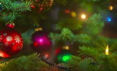 Ecco i vostri alberi di Natale: grandi, piccoli, originali. E tutti bellissimi
