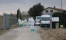 Aviaria, nuovo caso di contagio: zona rossa ai confini del Polesine