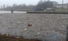 Quintali di rifiuti galleggianti nella conca del Tartaro-Canalbianco