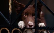 Finti volontari della Lega del Cane porta a porta: è una truffa!