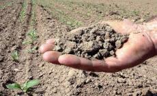 Agricoltura: proposte per generare opportunità di lavoro per i giovani