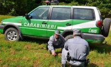"""Taglia alberi sul suo terreno: multato perché l'area è """"vincolata"""""""