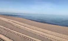 Anche i delfini scelgono le spiagge di Rosolina