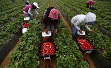 Il lavoro nero vale 5,4 miliardi di euro
