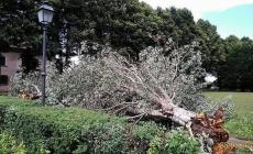Allagamenti in mezza provincia e alberi in strada