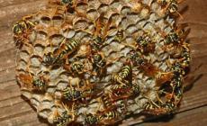 Ponte invaso dalle vespe sulla ciclabile che porta al Po