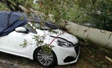 Basso Polesine devastato dal maltempo: danni e paura