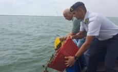Pescatore vendeva vongole non depurate, pizzicato dalla Finanza