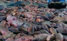 Strage di pesce e commercio non sicuro per la salute: banda sgominata