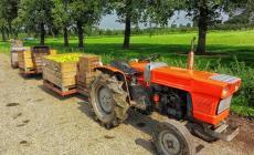 "La Cisl dice ""no"" ai voucher nell'agricoltura"