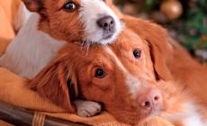 Cosa succede se investi un animale?
