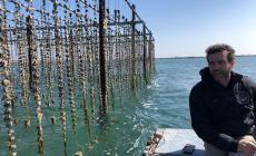 La Rosa di Scardovari: l'ostrica polesana presentata da Alessio Greguldo