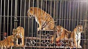 """""""Il circo è fermo ma gli animali soffrono ancora"""""""