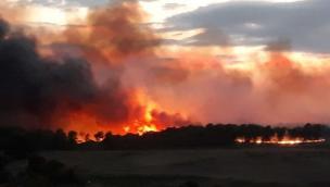 Notte d'inferno, brucia la pineta. Salvata dai vigili del fuoco