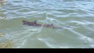 Un cucciolo di squalo avvistato in mare