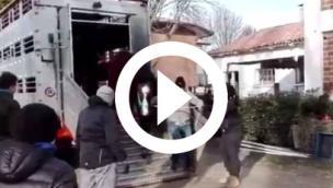 Il ritorno dei cavalli: un video splendido e toccante