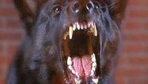 Cane corso aggredisce un cagnolino e la sua padrona