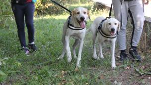 Il Comune dice stop ai cani a passeggio senza guinzaglio: ora arrivano le multe