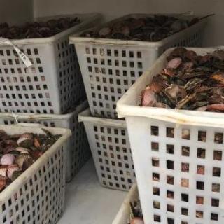 Una tonnellata di pesce in nero sequestrato dalla Finanza