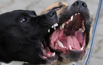 Cani aggressivi liberi a Parco Cibotto: controlli e multe
