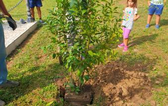Ridiamo il sorriso alla Pianura Padana, Adria c'è: alberi gratis per i cittadini che li vogliono