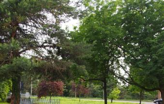 All'Interporto 150 alberi per il bosco dei nuovi nati