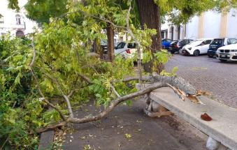 Abbattuto dal vento un albero in piazza Merlin