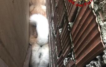 I pompieri salvano Sascia, il cane rimasto incastrato tra due muri