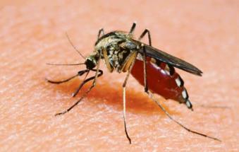 """""""Le zanzare non trasportano il coronavirus"""""""