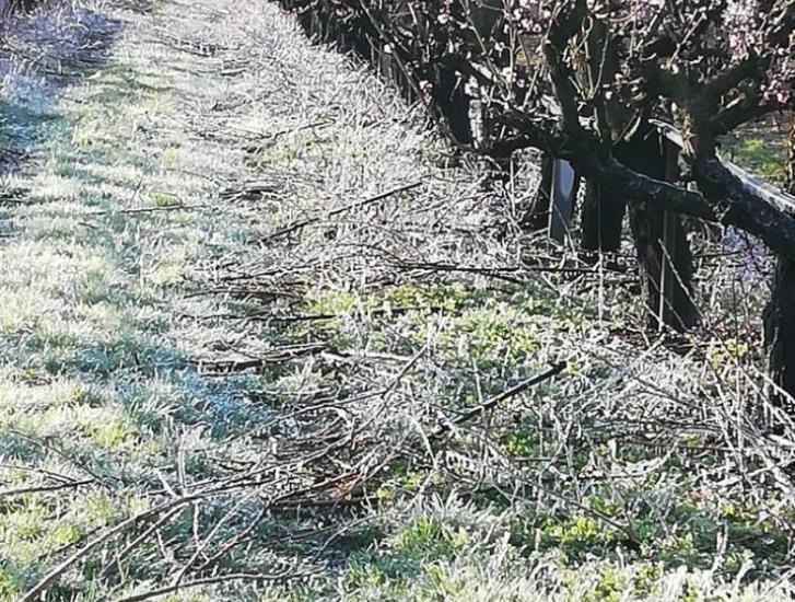 La Regione del Veneto ha approvato la declaratoria per i danni da gelate tardive