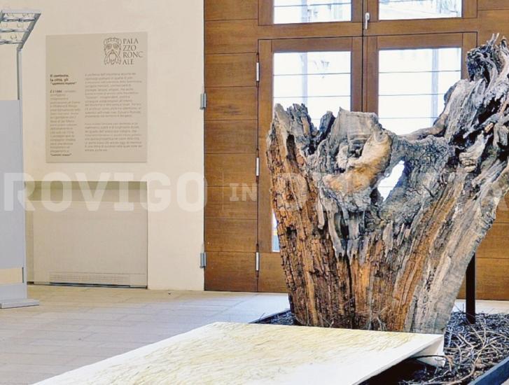 I rodigini premiano l'arte, tante le visite a Palazzo Roncale e alla Pinacoteca