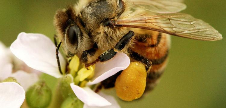 """La città diventa """"amica delle api"""""""
